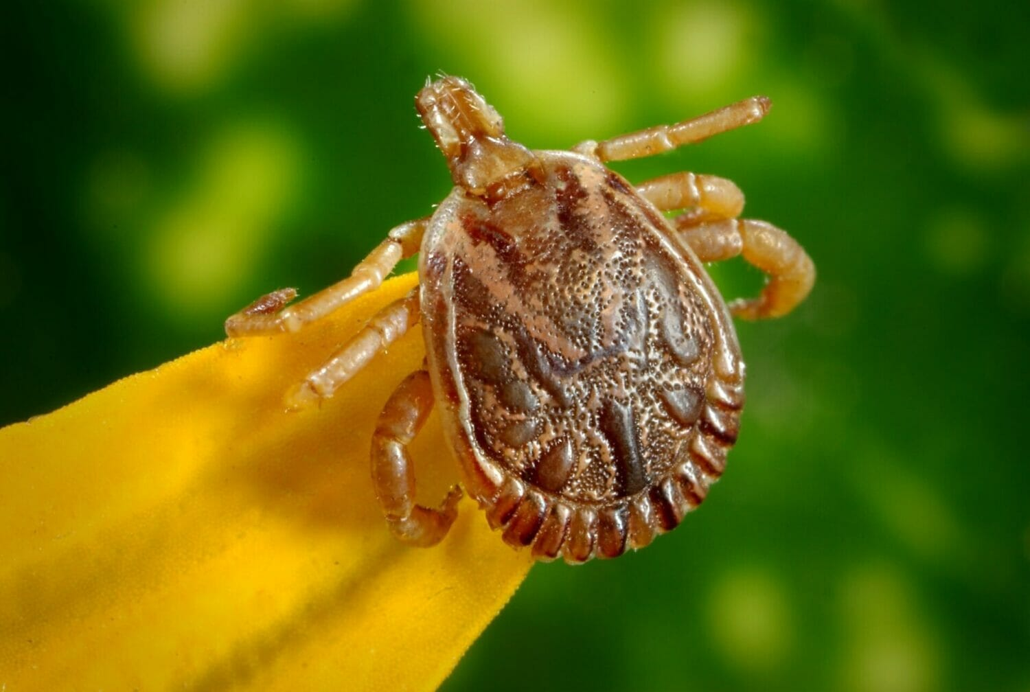 How to Protect Your Kids From Tick Bites: What Works Best?