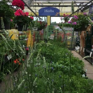 garden store herb section