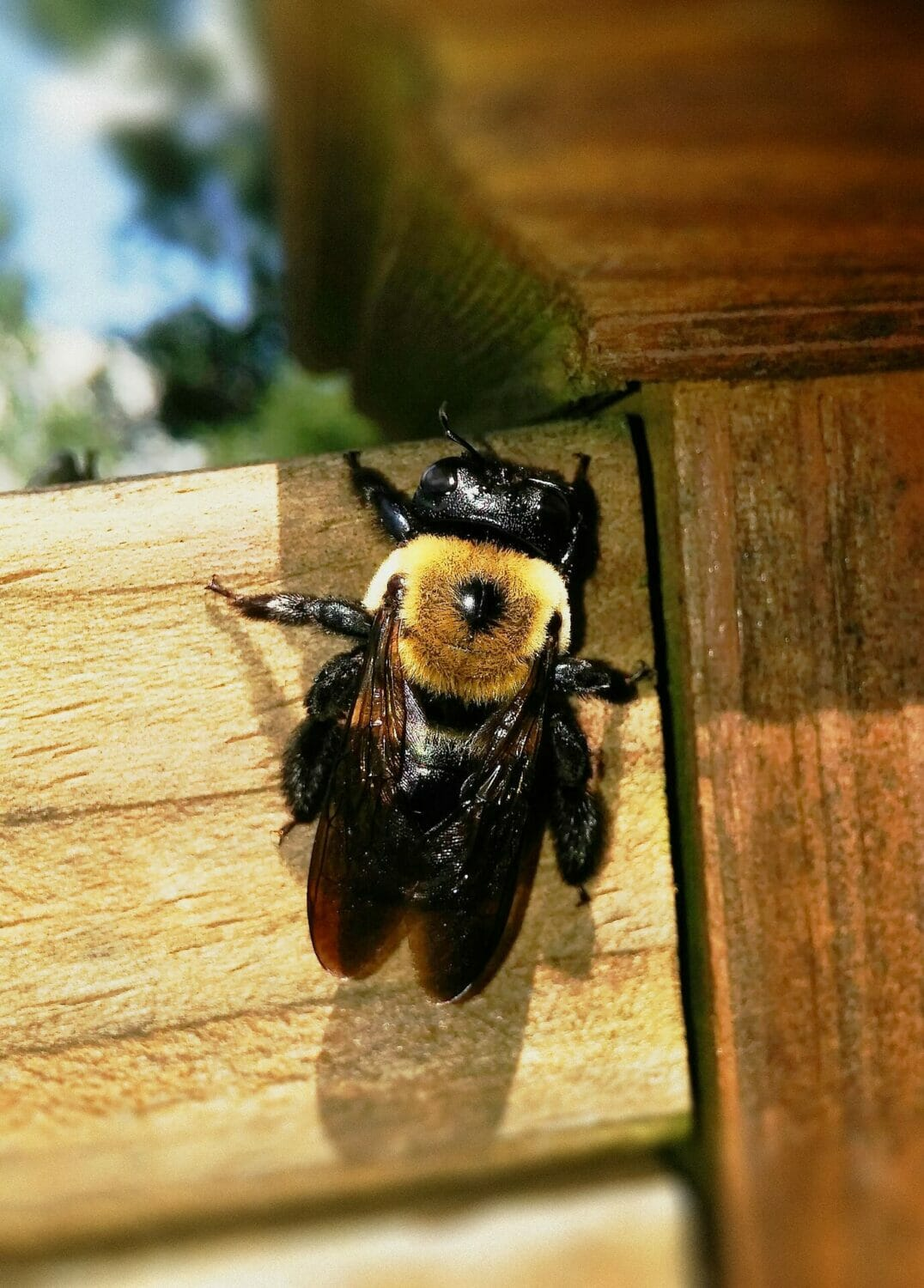 "Want to avoid that ""Help - something's eating my house!"" feeling? Know what to look for - and how to prevent problems from termites and carpenter bees."