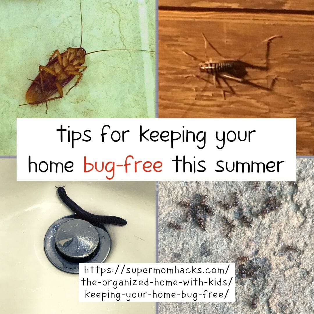 Does your home have a problem with insects? Keeping your home bug-free can be tricky, but these quick and easy tips will help get you there, faster.