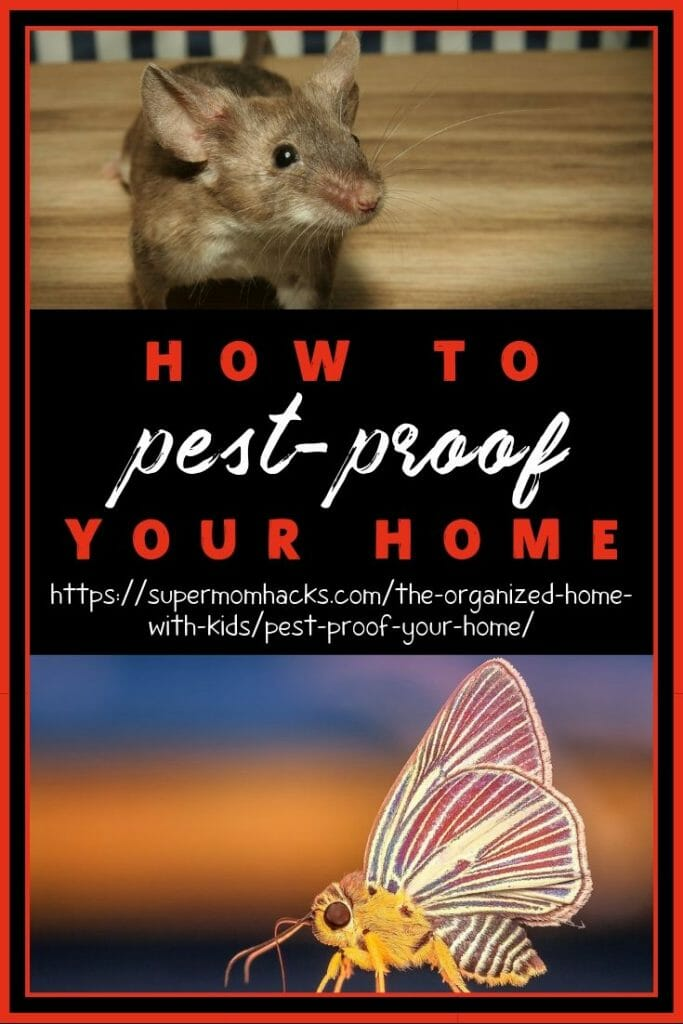 While prevention is the best way to pest-proof your home, there are also things you can do after the fact. This post has you covered either way.